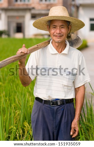 Chinese senior male peasant in the rice filed