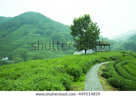 Chinese Tea mountain farmland at Hangzhou,famous for Longjing tea - stock photo