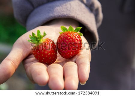 Chinese traditional agriculture, organic agriculture--farmland,strawberry