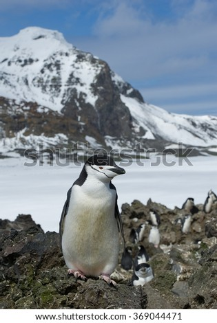 Chinstrap penguin standing on the rock with blue sky and rocky mountain in the background, South Sandwich Islands, Antarctica - stock photo