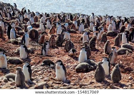 Chinstrip penguin breeding colony, west coast of antarctic peninsula, Antarctica - stock photo