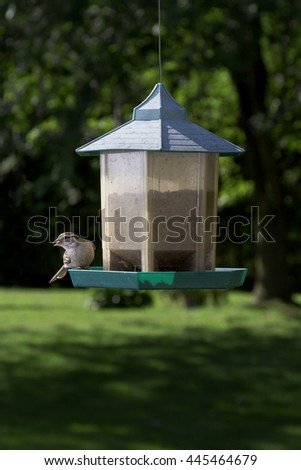 Chipping Sparrow on bird feeder with a seed in it's beak - stock photo