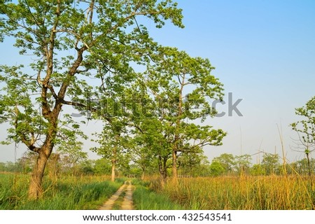 Chitwan National Park, Nepal - stock photo