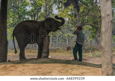 Chitwan National Park,Nepal - April 15, 2014:  Elephant and man