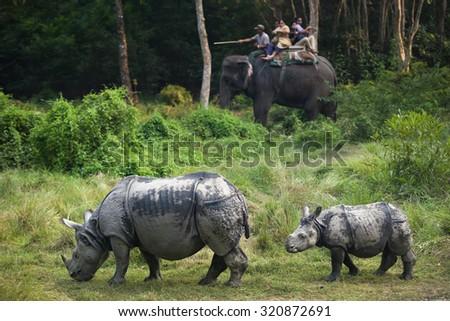 CHITWAN NATIONAL PARK/NEPAL - JUNE 2014 - Rhinos family walking in the jungle during safari on elephants. June, 16, 2014 in Chitwan, Nepal.  - stock photo