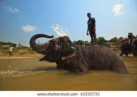 CHITWAN NATIONAL PARK, SAURAHA, NEPAL-CIRCA SEPTEMBER 2009: Unidentified man stands on bathing Asian Elephant (Proboscidea Elephas maximus) circa Sept. 2009 in Chitwan National Park river, Nepal. - stock photo