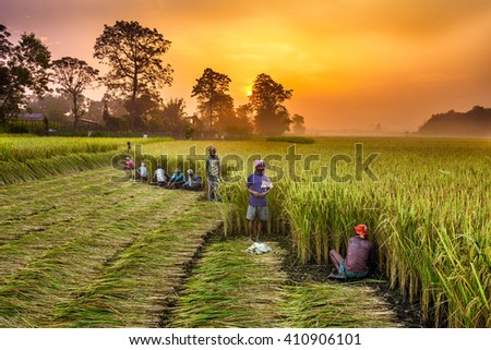 CHITWAN, NEPAL - OCTOBER 24, 2015 : Nepalese people working in a rice field at sunrise. In Nepal, the economy is dominated by agriculture. - stock photo