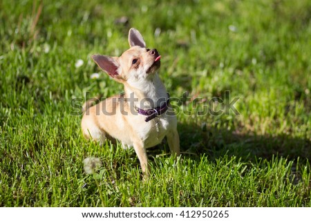 Chivava stock images royalty free images vectors for Dog day sitting