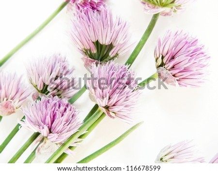 Chive flower - stock photo