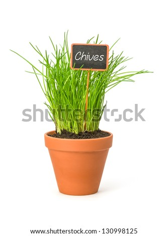 Chives in a clay pot with a wooden label
