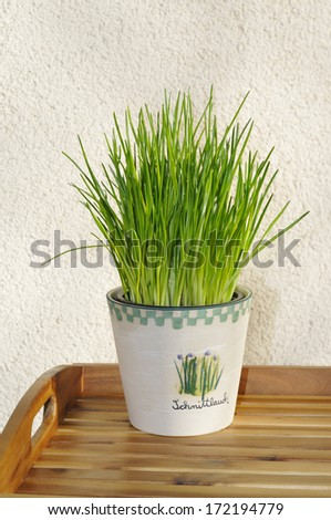 Chives in pot - stock photo