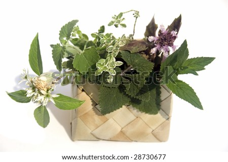 Chives, melissa, catnip, sage, red basil, lemon thyme, thai basil - stock photo