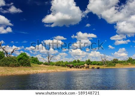 Chobe National Park, Botswana - stock photo