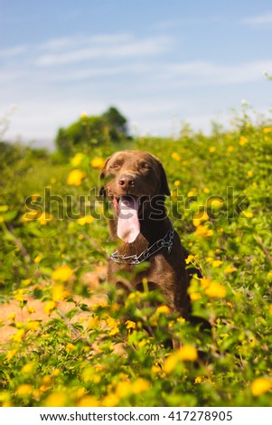 Chocolate dog with yellow flowers