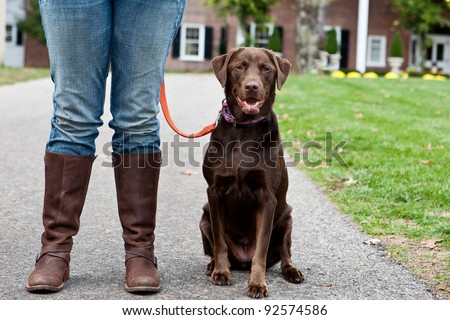 Chocolate Labrador with the legs of a woman wearing jeans and brown boots - stock photo