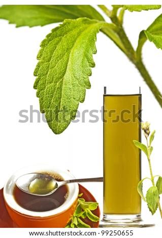 choke-berry,Aronia melanocarpa - stock photo