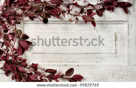 Choke cherry branches and blossoms on a vintage door - stock photo