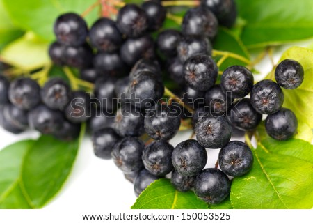 Chokeberry (Aronia ) Fruit on the white Background - stock photo