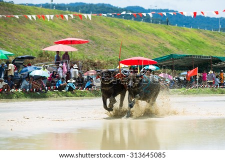CHONBURI THAILAND - August 30 : Status of traditional buffalo race, which is held annually at Chonburi, Thailand. on August 30, 2015. Traditionally held by farmers to conserve water buffalos