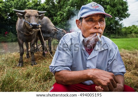 Chonburi, Thailand - July, 07, 2013 : Unidentified old farmer happily are smoking and buffalo in rice field.