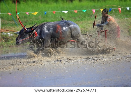 CHONBURI THAILAND - JUNE 28 : Status of traditional buffalo race, which is held annually at Chonburi, Thailand. on Jun 28, 2015. Traditionally held by farmers to conserve water buffalos in Thailand. - stock photo