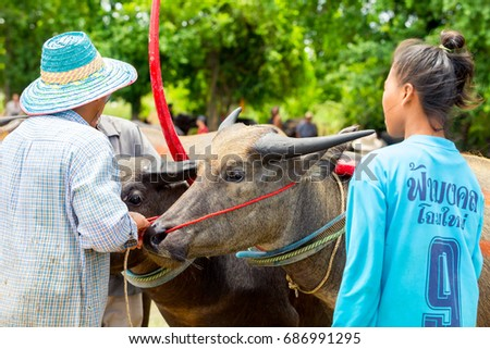 CHONBURI, THAILAND - JUNE 18, 2017 : Status of traditional Buffaloes racing in Chonburi, Thailand.The event is normally held before the rice planting season and marks the importance of buffaloes.