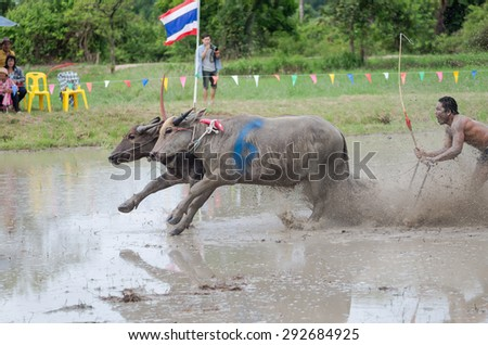 CHONBURI, THAILAND, JUNE 28 - Traditional buffalo racing on June 28, 2015 in Chonburi Province, Thailand.