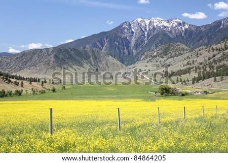 Chopaka Mountain, Wshington State and Okanagan Pass British Columbia. Canola blooms on ranchland in the Richter Pass in the south Okanagan. - stock photo