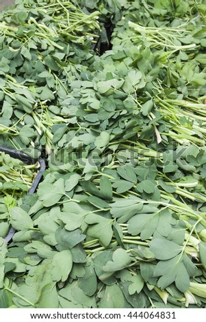 choumeisou,herb , agriculture product of  Yonaguni,Okinawa,Japan