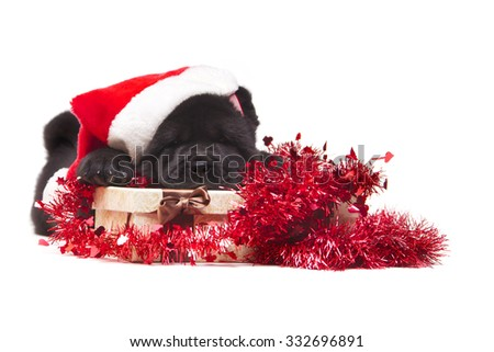 chow-chow puppy with Christmas gift isolated on white background - stock photo
