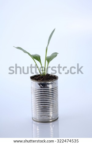 choy sum growing from the recycle aluminium can
