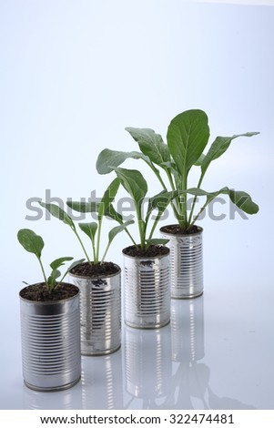 choy sum growth stage from the recycle aluminium can