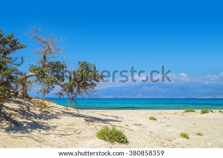 Chrisi (Chrysi) island background with weird lebanon cedar tree, Crete, Greece. One of the most beautiful uninhabited island of Greece. - stock photo
