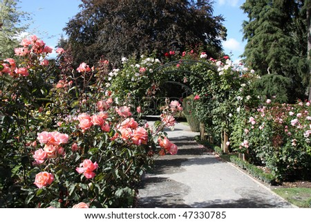 Christchurch Botanic Gardens (New Zealand). Rose garden. - stock photo