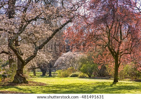 Christchurch, New Zealand, blossom trees turn Hagley Park into a fairyland.