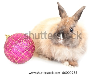 Christmas and new-year decorations.  Rabbit and red ball composition on a white background - stock photo