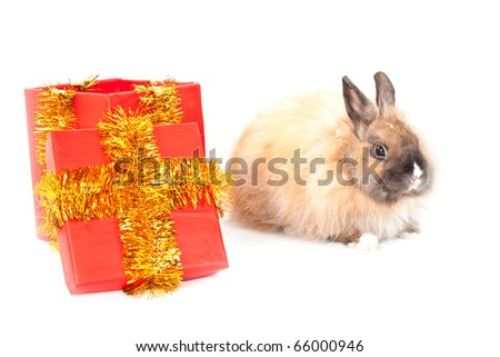 Christmas and new-year decorations.  Rabbit and red giftbox composition isolated on a white background - stock photo