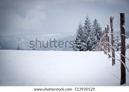 christmas background of snowy landscape with snow or hoarfrost covered fir trees - winter magic holiday