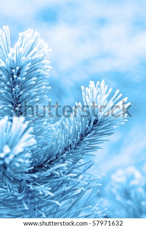Christmas background with frosty pine tree with stars. - stock photo