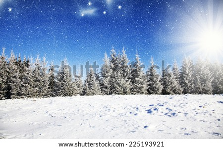 Christmas background with snowy fir trees  - stock photo