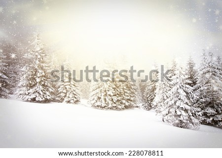Christmas background with snowy fir trees at sunset - stock photo