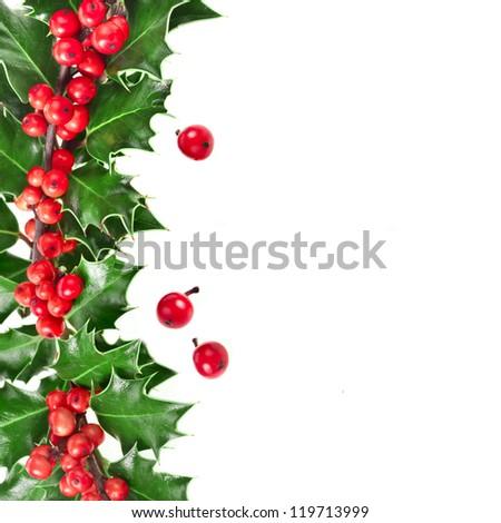 Christmas Border of holly Ilex isolated on white background - stock photo