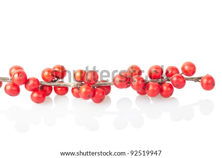 Christmas branch with red berries isolated on white, clipping path included - stock photo