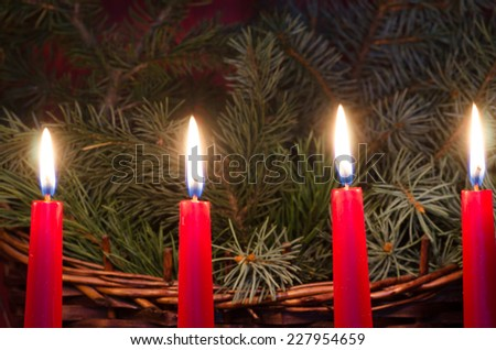 christmas candles on spruce twigs background