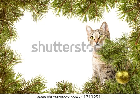 Christmas card, domestic cat and frame from fir branches - stock photo