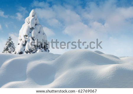 Christmas card snow picture. - stock photo