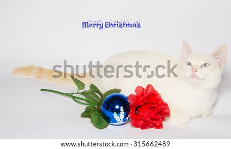 Christmas card with white kitten and blue ball - stock photo