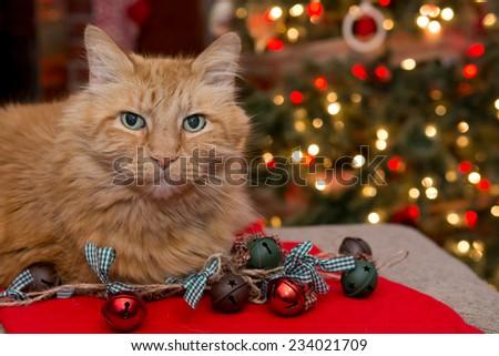 Christmas Cat - stock photo