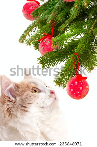 Christmas cat among a fur-tree - stock photo