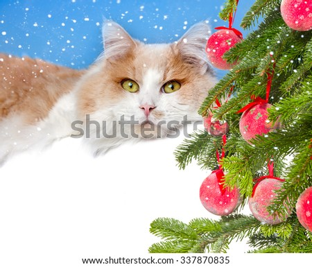 Christmas cat and gift - stock photo